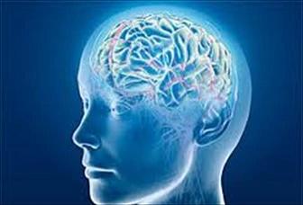 تعریف جدید دانشمندان از هوش!!!
